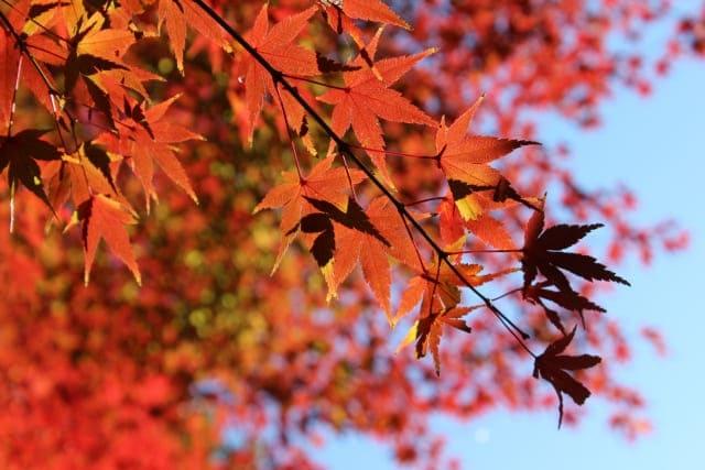10月は紅葉