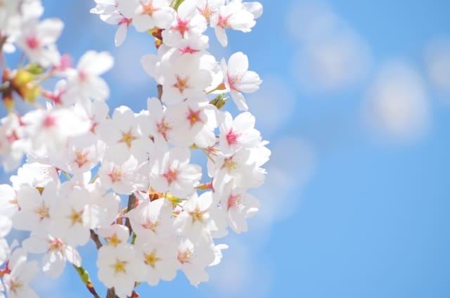 春休みは新生活の準備期間