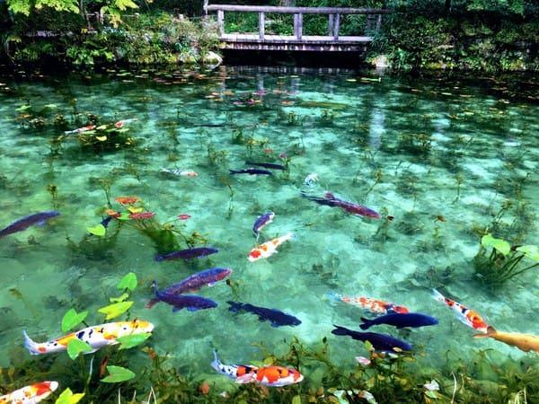 有名なモネの池