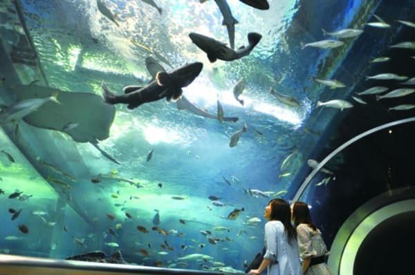 水族館マリンピア日本海